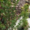 お庭の植栽の写真