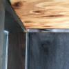 玄関にハチの巣が・・・